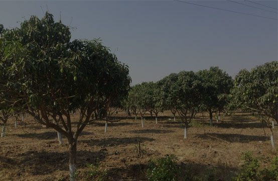 Agricultural Land For Sale in Moinabad – 1072