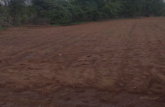 1316 – Organic Agriculture Land for Sale