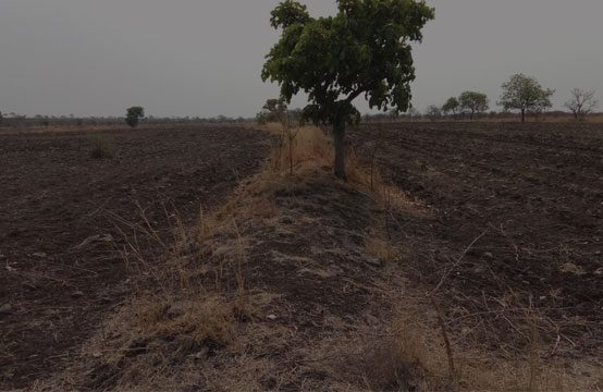 Agricultural land for sale in Sangareddy – (1074)