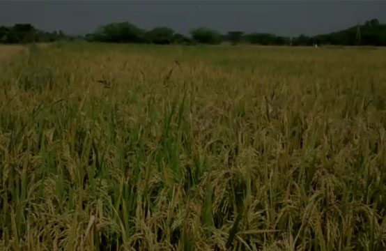 Agricultural Land For Sale in Vikarabad – 1145