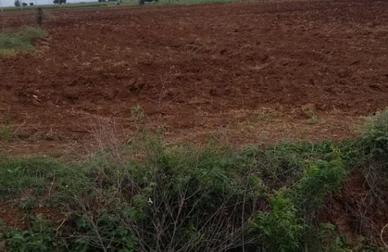 1355 – Open Agricultural Land for Sale