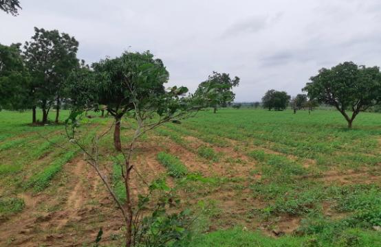 Mahbubnagar/FarmLand/1347/a